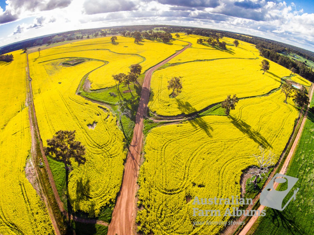 aerial photo of canola crop growing near Darkan, WA.