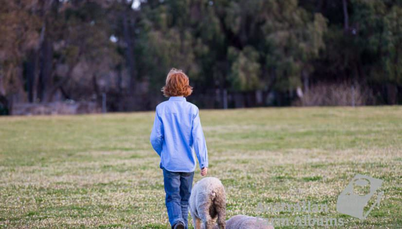 Farm photo with farm boy checking lambs in a paddock