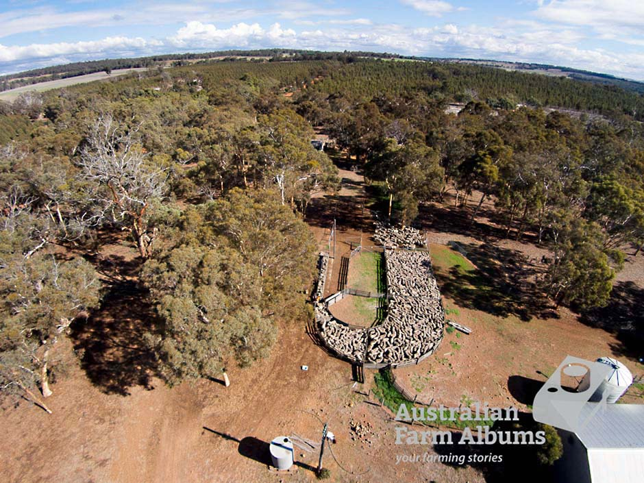 Aerial photograph showing sheep in yards and trees on an Australian farm