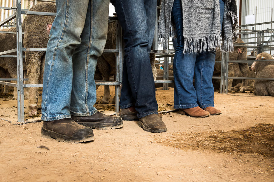 photo of legs in jeans and boots in front of ram pens