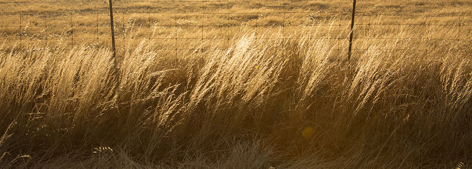 Image of dry grass along a fence line on a farm