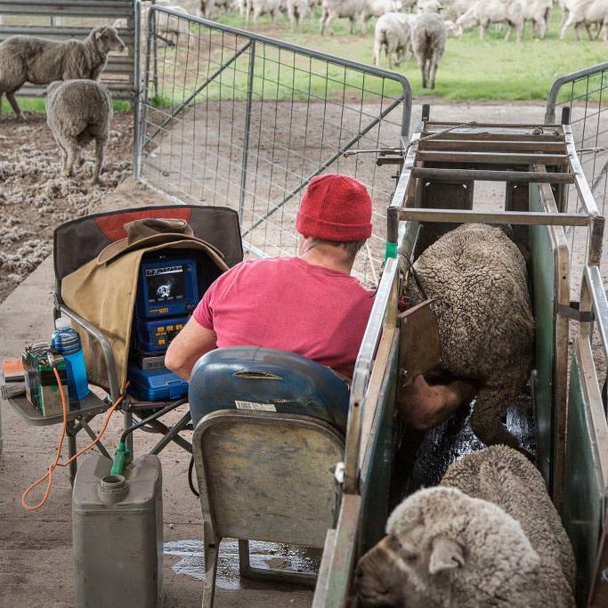 Photos of you doing what you are normally doing on the farm, whether it is drenching sheep, marking calves, feeding pigs, or harvesting crops.